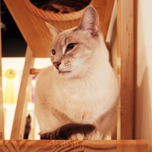 cat-1160233_1920.jpg